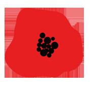 Logo Lili et le scarabée rOZ