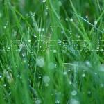 Collier de perles de pluie