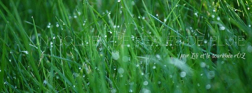 Un collier de perles de pluie