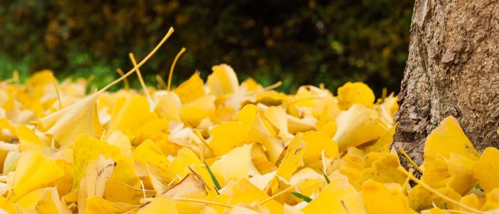aux-couleurs-de-l-automne